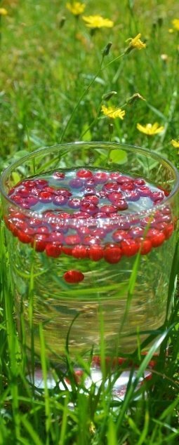 Lingon or Cranberry Water